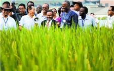 国际水稻论坛在三亚市举办 18国专家共享水稻发展成果