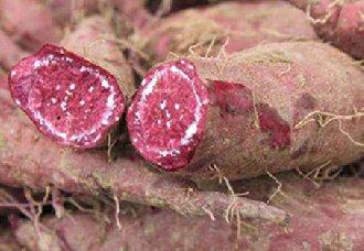 紫薯种植后要怎么进行管理?紫薯的五个管理方法
