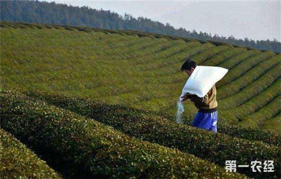 茶园果园为什么适合施用钙镁磷肥?施用时的注意事项