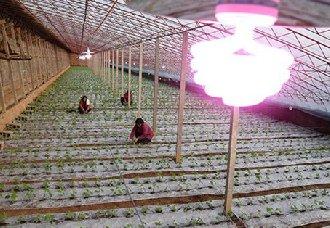<b>稀土补光灯让大棚蔬菜茁壮成长</b>