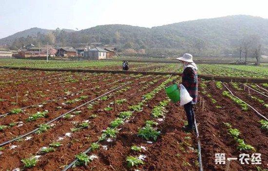 马铃薯怎么施肥才能高产?马铃薯的施肥方法
