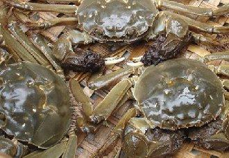 怎么预防河蟹颤抖病?河蟹颤抖病的预防措施