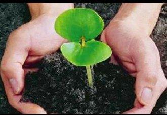 有机肥替代化肥可协调作物产量