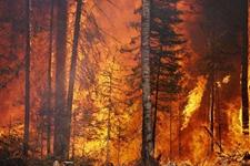 陕西商洛商州区发生森林火灾 经搜寻发现2名群众遇难