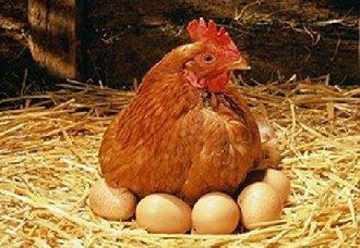 专家预测五一前鸡蛋价格有上涨趋势 将增加养鸡户利润