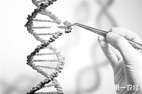 基因剪刀可能为农业带来新的翻盘机会