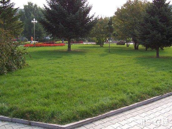 草坪使用多效唑时应该注意些什么?