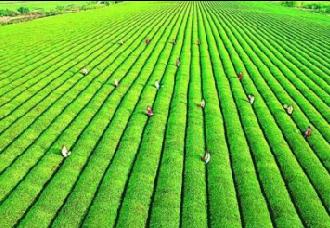 宿广君打造中国绿色农业信息平台,开启绿色农业互联网+新模式
