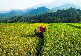 <b>农业农村部推动农民合作社高质量发展</b>