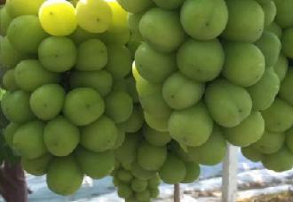 三润集团董事长吕科:设施葡萄产业如何接入新零售模式