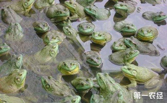 江西赣州严厉打击非法养殖业 牛蛙养殖也要接受监管排查