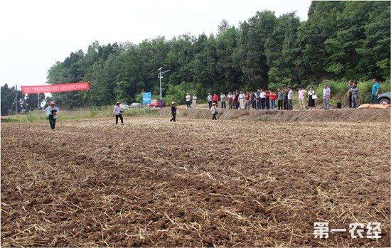 玉米大豆带状复合种植技术推广 助力农民增收