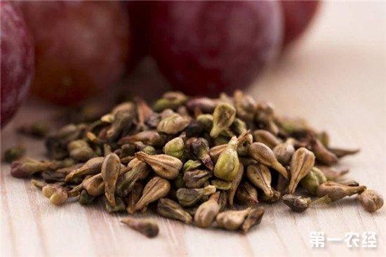 葡萄籽中的原花青素能美容?专家:直接吃吸收不了