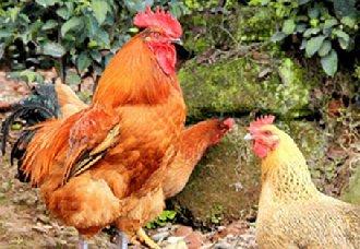 五一临近 我国各省市地区鸡蛋将进入需求高峰期
