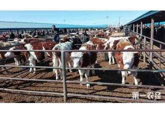 牛黄曲霉中毒的症状以及防治措施
