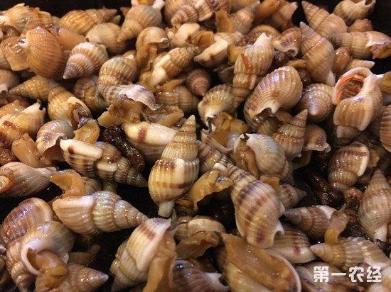 厦门疾控中心提醒:织纹螺毒性可达砒霜百倍