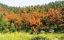湖南慈利县林业局举办森防培训 部署2019年相关工作