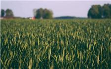 2019年耕地地力补贴政策怎么领?补贴条件和申请注意事项