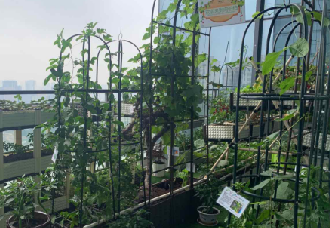 皇图生态农业,将绿色种植搬到每个阳台上