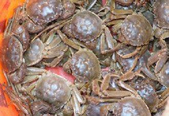 河蟹脱壳期要注意什么?河蟹脱壳期的管理要点