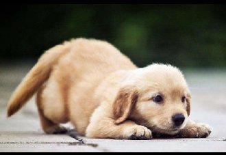 犬瘟热的症状以及预防措施