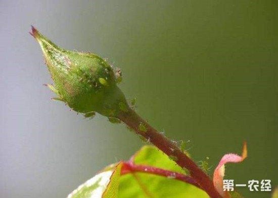 不用农药怎么灭害虫?无公害防治害虫的几种方法