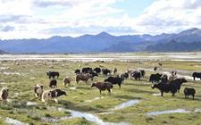 2019年一季度西藏农牧业生产数据报告