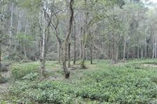 广东林业局全面启动生态公益林完善落界工作