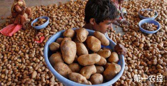 印度农民种百事土豆被告侵权 百事提出和解