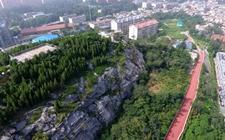 山东济南:私自砍伐毁坏绿化树木 责任人应被追究刑事责任