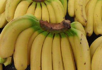 香蕉为什么没有种子?它们又是怎么繁殖的?