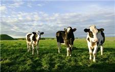 有机奶粉被热炒 专家提醒消费者理性消费