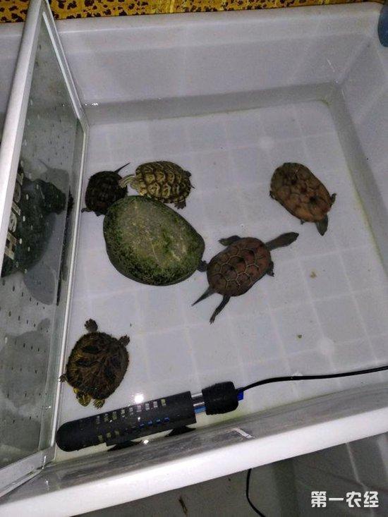 乌龟和小金鱼能一起养吗?鱼缸里要放氧气泵么?