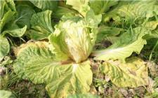 <b>蔬菜防治病虫害注意事项 如何减少农药使用量</b>
