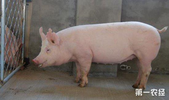 铁架上猪台设计图