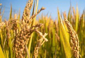 2019水稻补贴新政策有哪些?来看下以下八个
