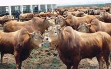宁夏固原畜牧产业获得10亿元项目投资