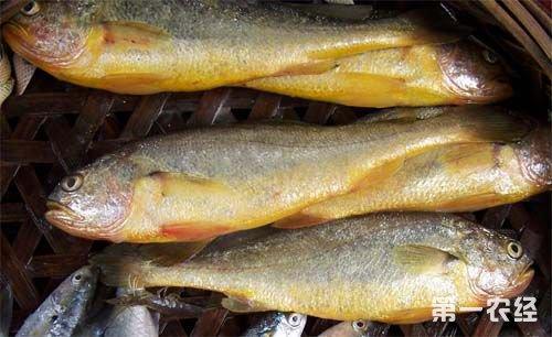安徽省水产养殖产量下降 水产品市场价格上涨明显