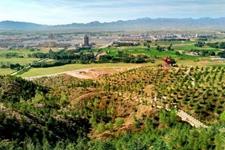 甘肃戈壁:林业工作人员30余载植树播绿 坚定治沙造林发展生态林业