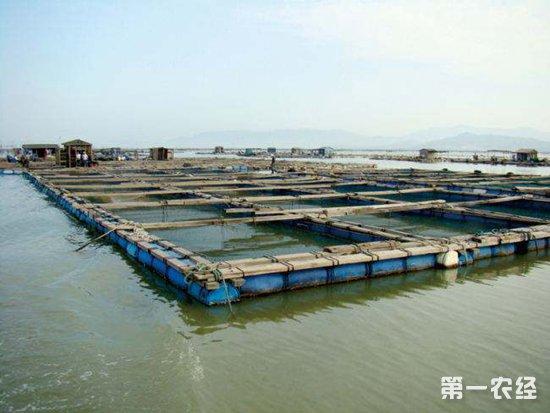 """农业农村部公告大口黑鲈""""优鲈3号""""等14个水产新品种"""
