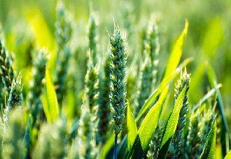【展会论坛】5G时代来临,邀您见证农业变革 ——2019中国(广州)智慧农业技术应用论坛
