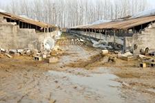 云南丽江:全市关停搬迁畜禽规模养殖场20家