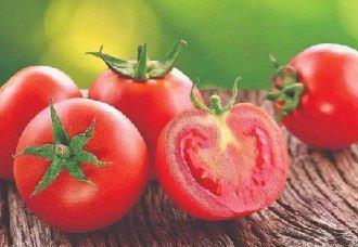 <b>3个具有国际水准的番茄新品种取得了自主知识产权</b>