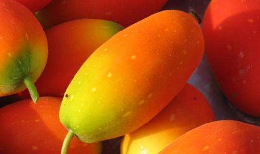 红参果怎么种植?红参果的种植技术