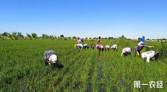 田间除草时除草剂没效果的五个原因