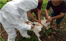 羊痘如何防范?羊痘疫苗的使用方法