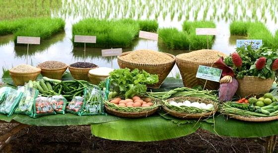 黑龙江省大力开辟农产品国际市场 促进出口贸易转型升级