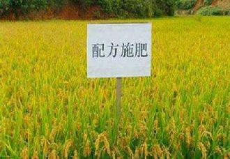 江苏如皋今年农作物测土配方施肥技术覆盖率需达90%以上
