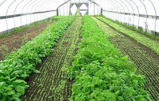 """大棚蔬菜产业成了他们脱贫的""""绿色希望"""""""