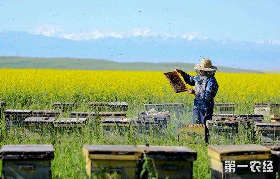 蜜蜂的习性及我国养蜂业的状况介绍